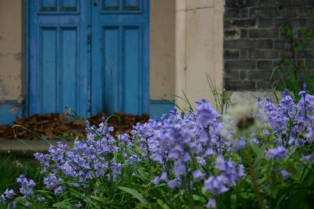 church_bluebells