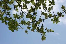 images/green_and_blue